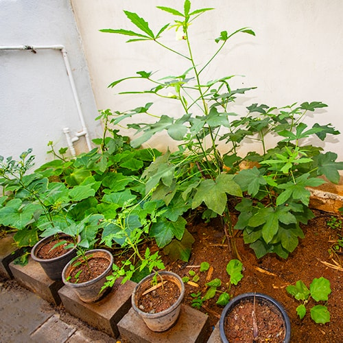 Gardening - School Facilities at Shraddha Childrens Academy
